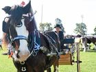 Clare Gorwin with her clydesdale gelding Sonny at the Gatton Heavy Horses Display.