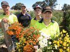 Picky volunteers needed for bumper flower crop
