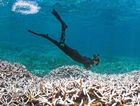 WHITE OUT: A diver inspects a bleached portion of the Great Barrier Reef. Photo XL Catlin Seaview Survey.