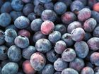 IN SEASON: Local blueberries.