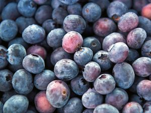 Hundreds of jobs on offer in predicted blueberry boom