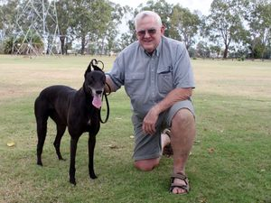 Greyhound racers' ready to claim back Rocky's richest prize