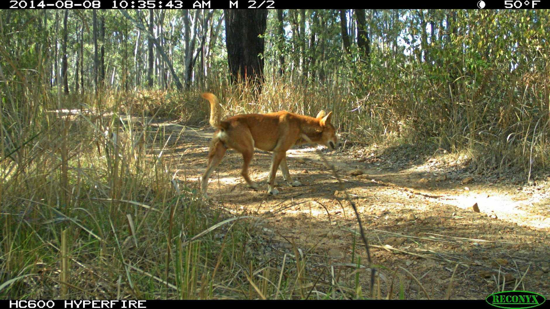 WOOF: Feral dogs not welcome