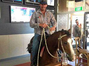 A horse walks into a bar... in Gayndah