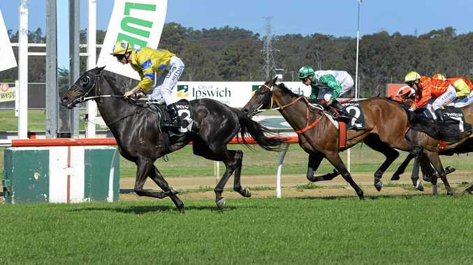 Tints winning the Miners Federation Centenary Cup (2150m) at Ipswich last October.
