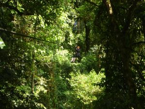 Ziplining through the trees of Costa Rica