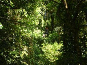 Ziplining through the trees of Costa Rica