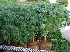 Queensland moves closer to legalising medicinal marijuana