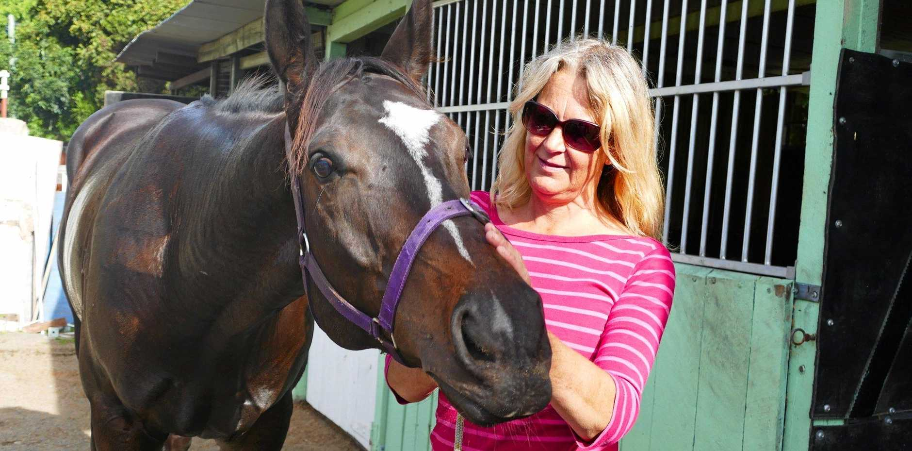 FAST MOVER: Steve's Surprise is placid around the stables, but has been dynamite on the race track since moving from Western Australia this year says his strapper Dee Kilner.