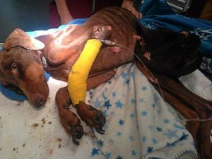 RSPCA slam dog owners after dobermans starved to death