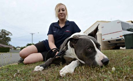 CLOSE CALL: Leila Thompson says her pet dog Max was the victim of dog baiting on Tuesday morning.