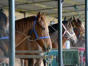 If your horse breaks its leg, it's no longer a death sentence