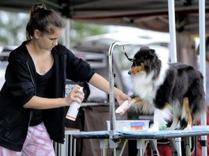 Pampered pooches at the Ipswich Show