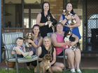 Members of the Cavalier King Charles spaniel owners Toowoomba group (from left) Gabe Fisher, Antonia Fisher with Duke, Kimberly Boyton with Oakley, Emily Swann with Chloe (standing), Heather Boyton with Buddy and Lizz Whittall with Charli look forward to RSPCA's Milllion Paws Walk.