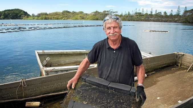 Noel Baggaley at his oyster lease on the Brunswick River. PHOTO: KATE O'NEILL