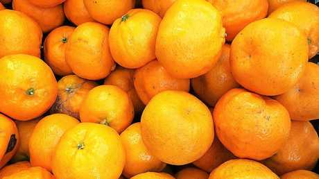 Most growers are harvesting the early season Imperial mandarin variety, which has a great flavour, is easy to peel and has few seeds.