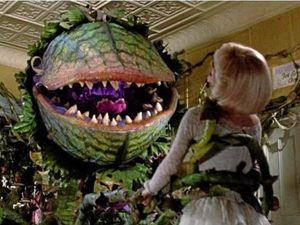 Little Shop of Horrors to open in Bangalow