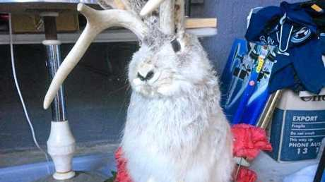 Taxidermy is a big part of Chayne Hultgren's monster garage sale.