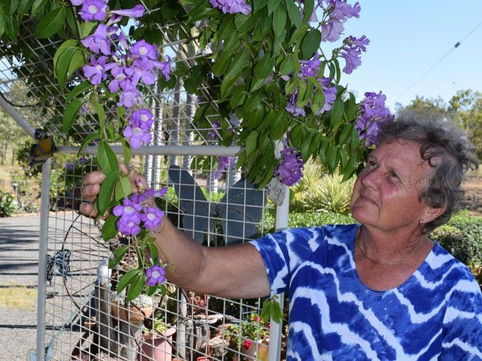 Betty Gibbs has never known the name of this plant. Now has been identified as garlic vine or Mansoa Alliacea.
