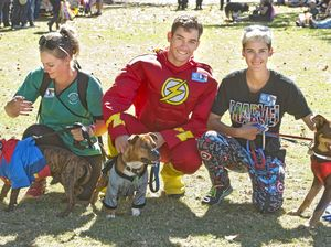 Dogs put best paw forward for Million Paws Walk