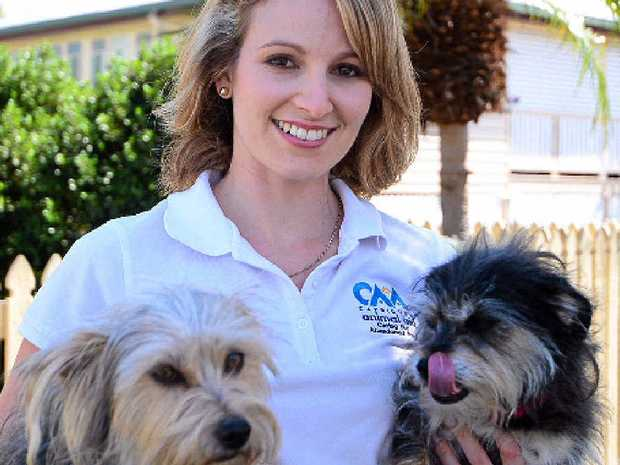 Capricorn Animal Aid president Katina Kilpatrick with two rescue pups who had found new homes.