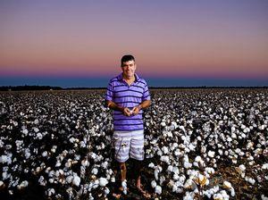 Cotton picking season draws to a close