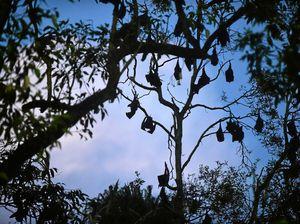 From batty to bat-free: Dispersal program is a winner