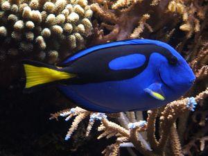 Finding Nemo sequel could decimate this fish