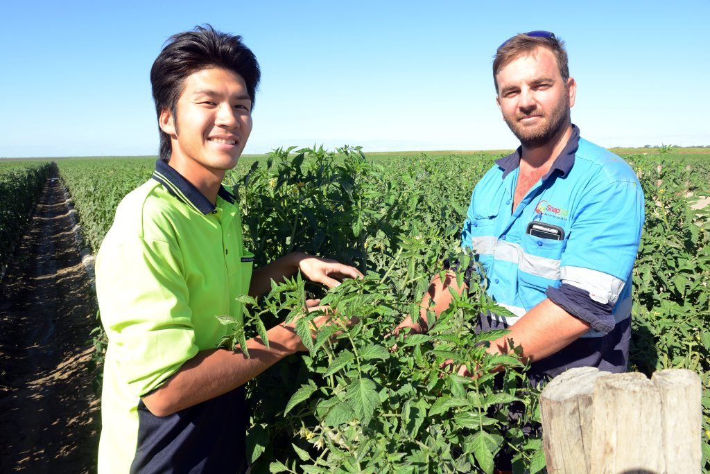 BACKPACKER TAX: Kohei Shiino and Rhys Abdy out in the field of Snapfresh Australia. Photo: Paul Donaldson / NewsMail