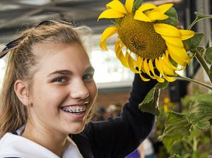 Toowoomba's green thumbs weigh in hefty sunflowers
