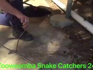 Snake found near school