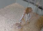 Australia Zoo's newest arrival.