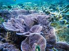Operators say reef still full of colour