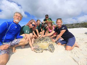 Stumpy the turtle released safely back into the sea