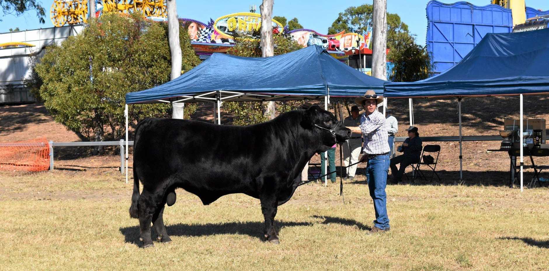 CHAMPION: 960kg bull OakVale Doo with owner Paul Freidman.