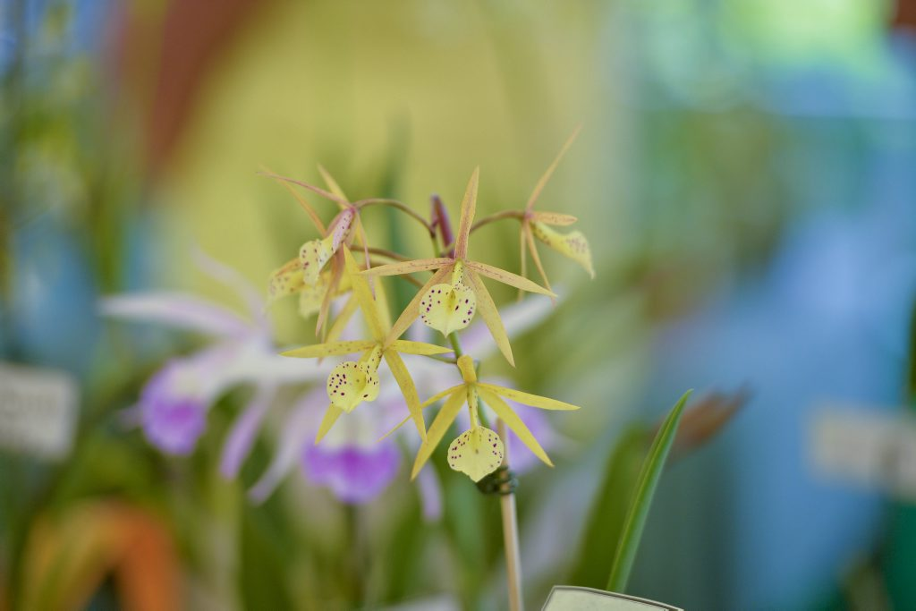 Orchid House will provide an insight into the history and plans at Hervey Bay's Botanical Gardens on Sunday