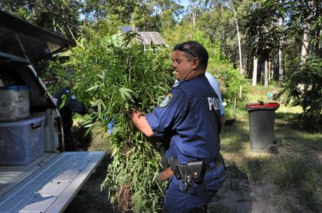 Drug Raid Nimbin Stony Chute Road 21 plants retrieved, two buckets cannabis resin, Richmond Local Area Command Action Group . Photo Marc Stapelberg / The Northern Star