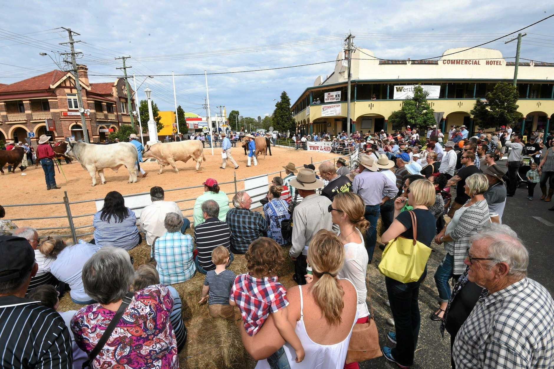 CATTLE MOOVE IN: The auction attracted a large crowd of punters at Casino Beef Week last year.
