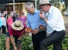 Prime Minister Malcolm Turnbull visits Rockhampton. Photo Allan Reinikka / The Morning Bulletin