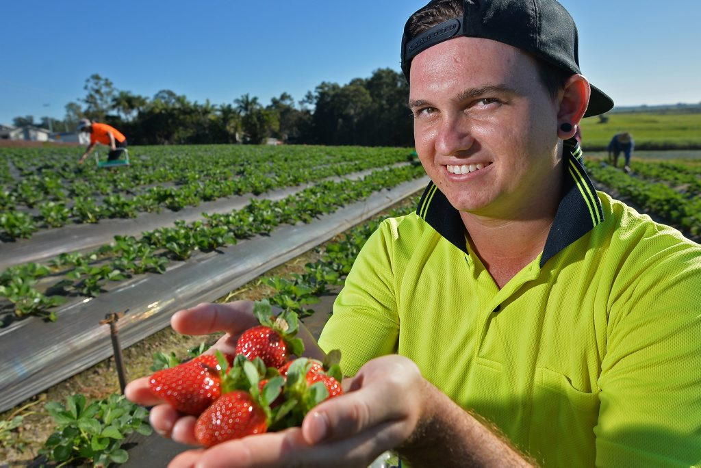 JOIN US: Jedaco Berries employee Brendan Pickett at the farm in Bli Bli, enjoying his sweet job during the launch of a new campaign that is offering thousands of jobs for locals.