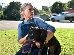 Dog owners barking mad to let dogs wander