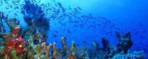 Diving in Vanuatu.
