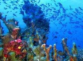 Diving Vanuatu opens up a whole new world