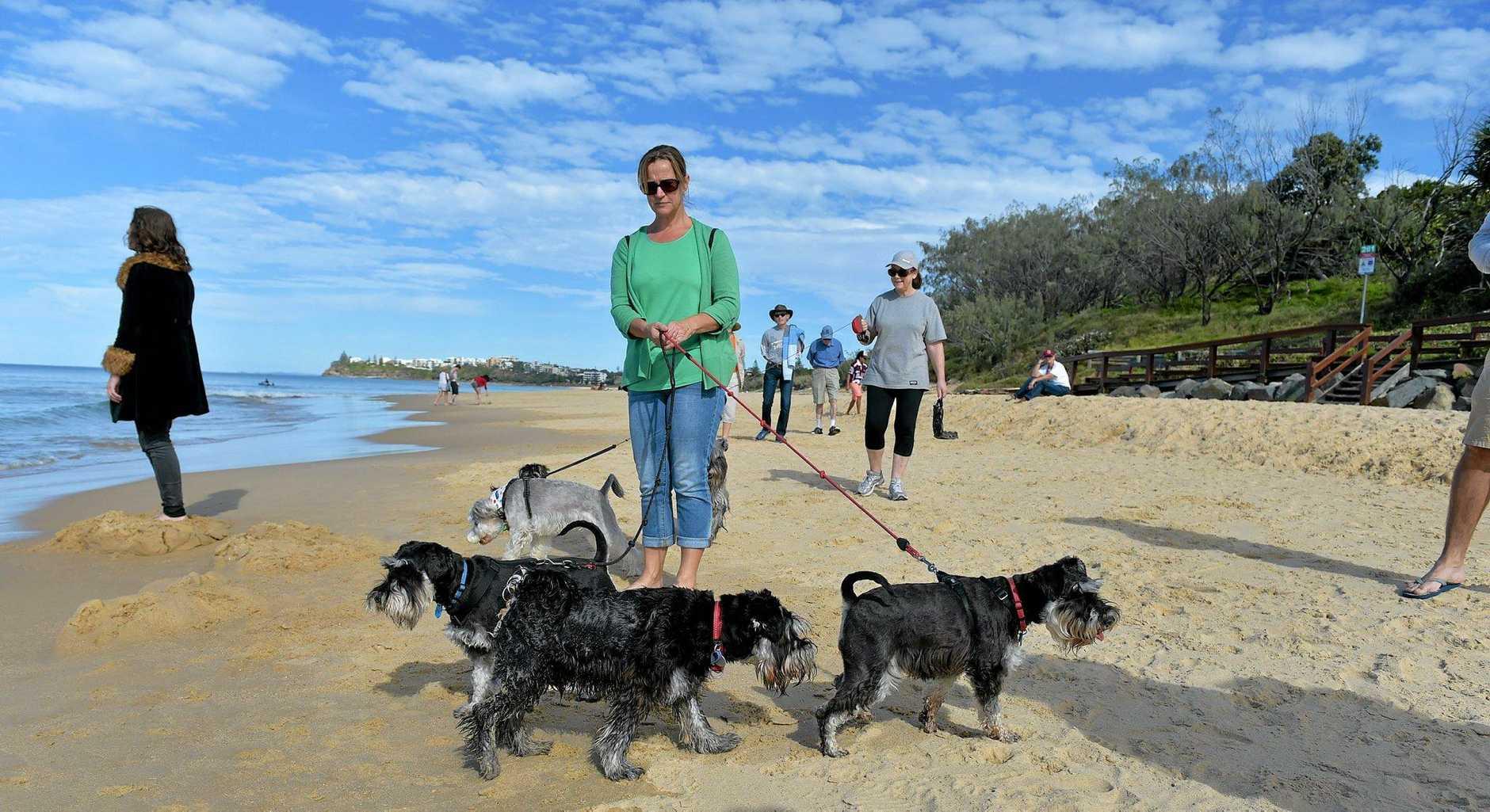 Carol Hamilton keeps a rein on her dogs.