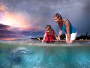 Tangalooma Island Resort dolphin feeding