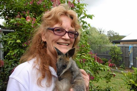 WILVOS' Donna Anthony has been volunteering with the organisation for almost 20 years. She is pictured with seven-month-old swamp wallaby Nesquita.