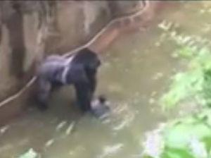 Anger mounts over shooting of gorilla in Cincinnati Zoo