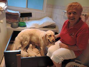 Smart pups meet a need in helping kids