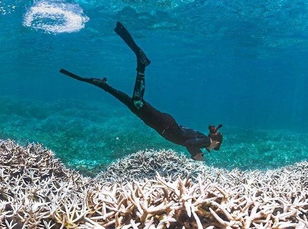WHITE OUT: A diver inspects a bleached portion of the Great Barrier Reef.