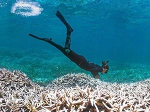 My Say: State Govt's Reef funding pledge a bit rich